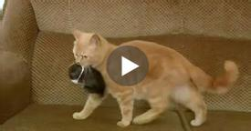 Cat finds an orphaned baby rabbit, adopts and raises it as one of her own