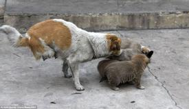 Two-Legged Stray Mother Cares For Her Homeless Family