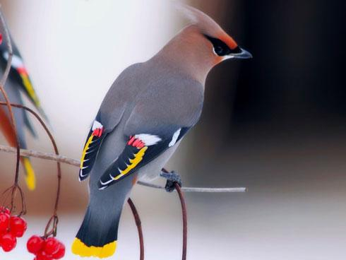 10 loài chim đẹp nhất thế giới