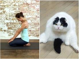 Ảnh hài: Tag đứa bạn thích tập yoga của bạn vào đây