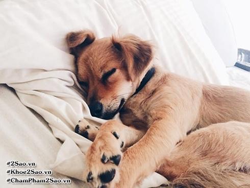 Tin được không? Có quá nhiều lợi ích để bạn cho chó cưng lên giường ngủ cùng