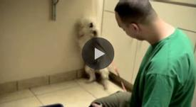 Rescue dog's afraid of everyone, but when she realizes everything's going to be okay… Wow.