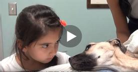 She Stares Into The Eyes Of A Dying Dog. What Follows Seconds Later Is A Miracle!