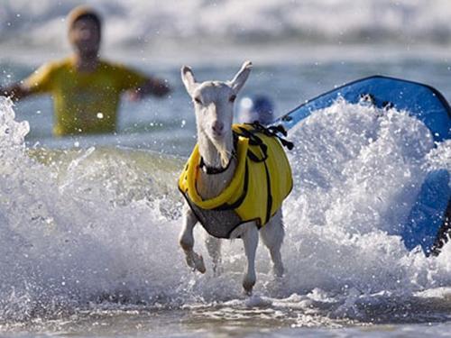 Bị đổ tiếng 'dê' trên bãi biển, phải làm sao?