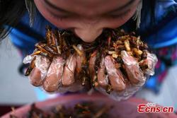 Du khách thắng vàng 24K sau khi ăn hết 1,23 kg côn trùng
