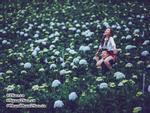 Vườn Cẩm Tú Cầu 'đẹp xinh' tại Cao Bằng vừa được giới trẻ Việt khám phá