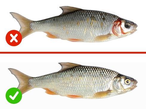 Mẹo nhìn con cá, biết ngay nó còn tươi hay đã ươn để ăn cho an toàn