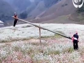 Clip đu quay trên cánh đồng tam giác mạch ở Việt Nam gây sốt