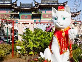Ghé thăm thành phố nơi những chú mèo đáng yêu 'thống trị'