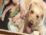 Hi hữu: Chú chó con sinh ra đã có bộ lông màu xanh lá cây