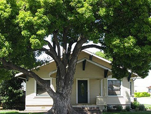 Trồng cây trong nhà kiểu này ai cũng tưởng tốt hóa ra xui xẻo kéo đến, dễ rước họa vào thân