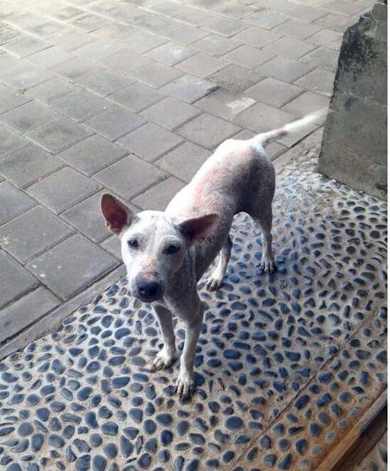 emaciated dog