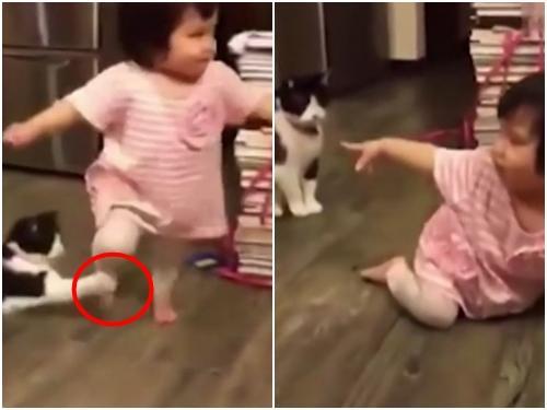 Clip Hài: Đã tìm ra chú mèo 'xấu tính' nhất trên thế giới