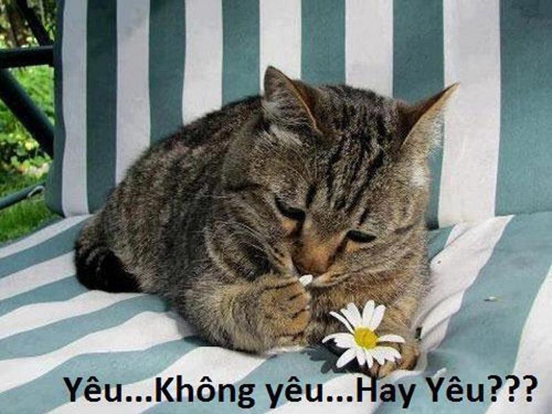 Ảnh hài: Những khoảnh khắc thú vị của loài mèo trong cuộc sống