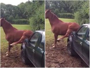 Clip hài: Cách gãi ngứa có 'một không hai' của chú ngựa hoang