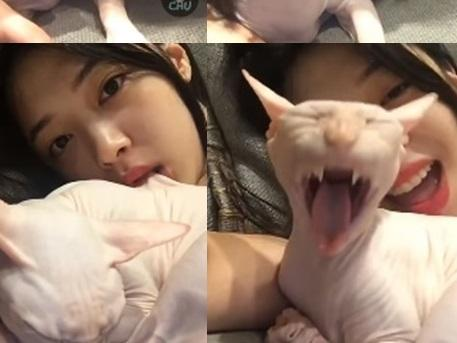 Sao Hàn 24/7: Sự thật đằng sau hành động Sulli 'cắn xé, hành hạ động vật'