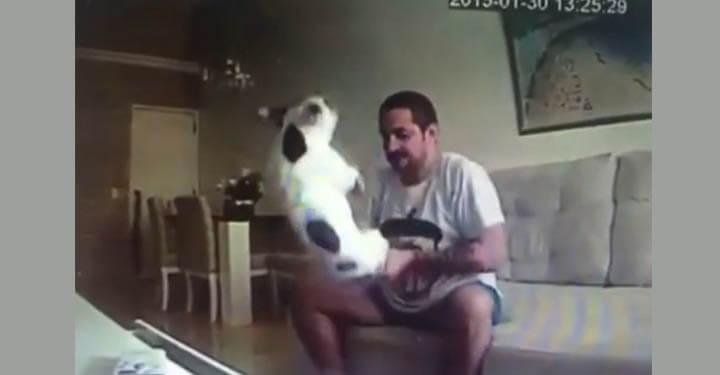 Woman Sets Up Hidden Camera And Discovers Fiancé Beating Her French Bulldogs So She Calls Off Wedding!