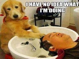 Truyện cười: Khi 'người rất tốt' làm nghề cắt tóc gội đầu