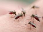 Khi sốt xuất huyết đang ở đỉnh dịch, những thông tin QUAN TRỌNG này ai cũng phải biết