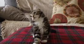 Kitty Hears His Favorite Song, But When He Starts Dancing… This Is The Best Thing Ever, Awww!!