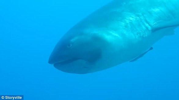 Du khách ghi được cảnh sinh vật cực hiếm thấy khi lặn biển-1