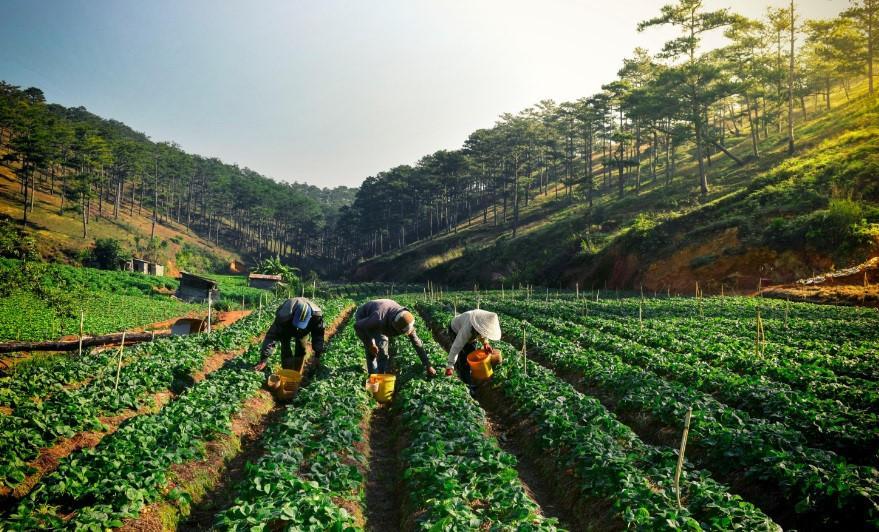 Đà Lạt mộng mơ trong 'Dấu ấn Việt Nam'-3
