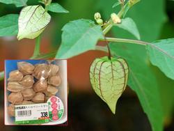 Không thể tin nổi loại quả mọc như cỏ dại ở Việt Nam lại bán 700.000 đồng/1kg ở Nhật
