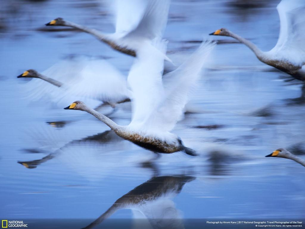 'Sức mạnh thiên nhiên' chiến thắng giải ảnh Du lịch 2017 của NatGeo-12