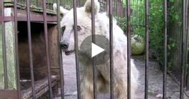 Bear was held captive for over 30 years, has priceless reaction when she's finally freed