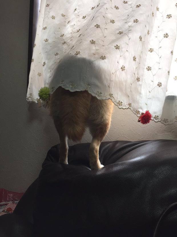 Nàng cún Shiba lầy lội: đã ra đường là không bao giờ chịu về nhà-2