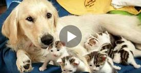 Dog Helps Mother Cat Deliver Her Kittens And It Is So Beautiful To Watch