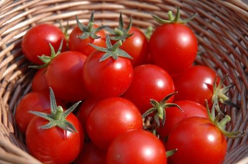 Cho cà chua đông đá rồi chà lên khắp mặt trong vài phút, 10 người dùng 9 người mê-1