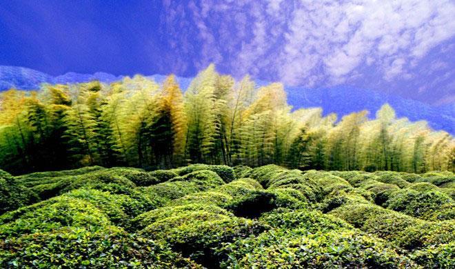 Đột nhập Rừng Trà Biển Trúc đẹp ngoạn mục trong 'Thập diện mai phục'-11