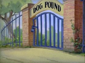 Tom và Jerry: Đột nhập lãnh địa của... chó