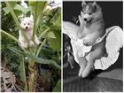 Kẹt trên cây chuối, chú chó bị dân mạng 'dìm hàng' không thương tiếc