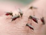 Chế độ ăn giúp người bị sốt xuất huyết nhanh khỏe mạnh-4