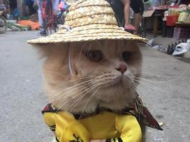 Mèo cosplay ra hàng thịt ngoài chợ, 'mặt gian' vì thèm và đây là phản ứng của các tiểu thương