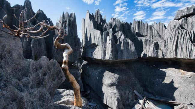 Kỳ quan rừng đá ít người có thể tới ở Madagascar-1