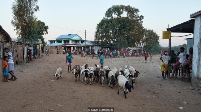 Kỳ quan rừng đá ít người có thể tới ở Madagascar-5
