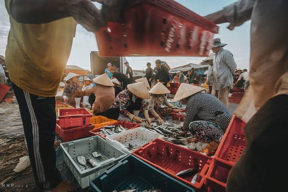 Hình ảnh bình dị trên cảng cá Bà Rịa - Vũng Tàu-3