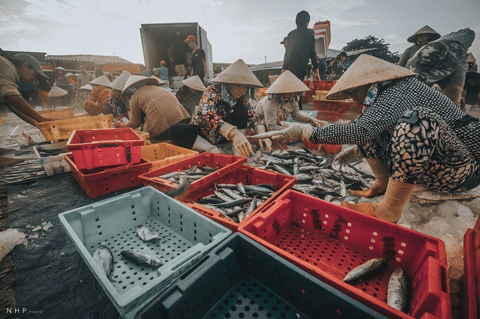 Hình ảnh bình dị trên cảng cá Bà Rịa - Vũng Tàu-5