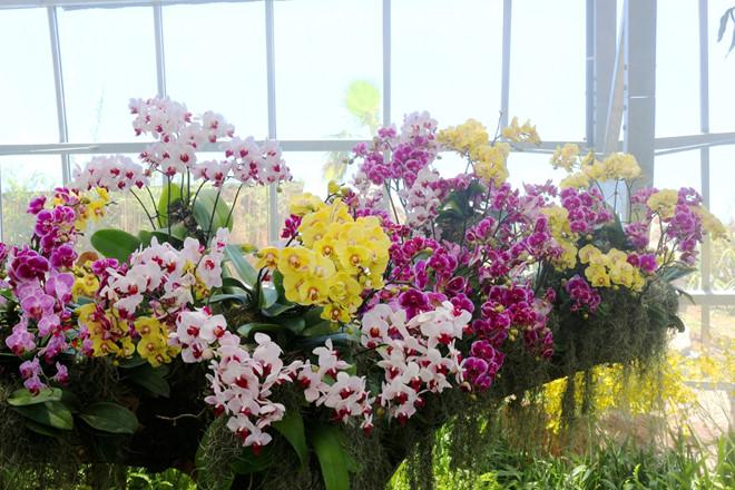 3 điểm ấn tượng của Đồi vạn hoa - Vinpearl Land Nha Trang-2