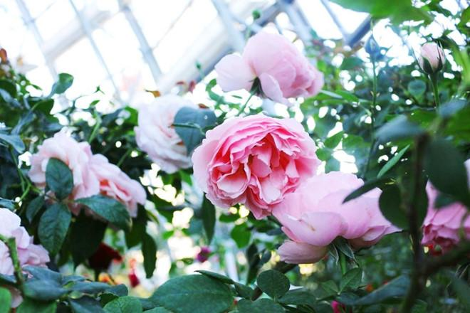 3 điểm ấn tượng của Đồi vạn hoa - Vinpearl Land Nha Trang-1