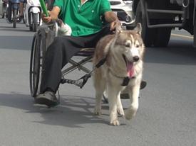 Khi chó cũng có thể kéo xe