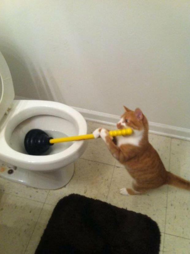 Ảnh hài: Khi 'boss' mèo cố gắng tỏ ra... bình thường-1