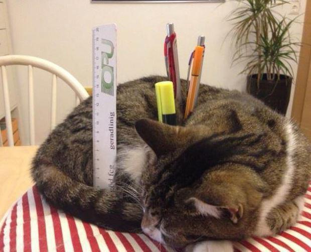 Ảnh hài: Khi 'boss' mèo cố gắng tỏ ra... bình thường-2