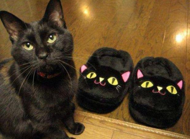 Ảnh hài: Khi 'boss' mèo cố gắng tỏ ra... bình thường-4