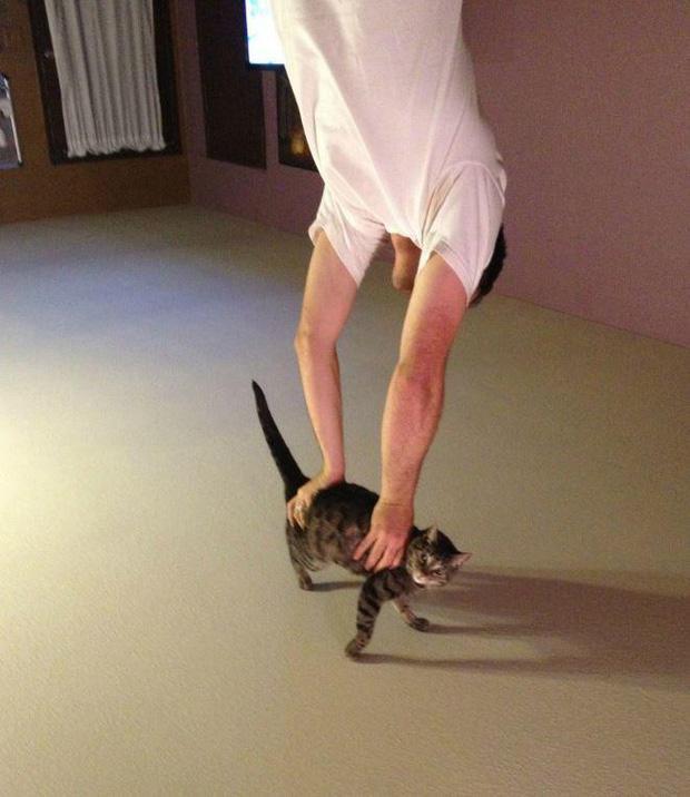 Ảnh hài: Khi 'boss' mèo cố gắng tỏ ra... bình thường-5