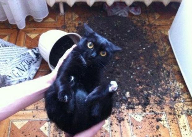 Ảnh hài: Khi 'boss' mèo cố gắng tỏ ra... bình thường-6