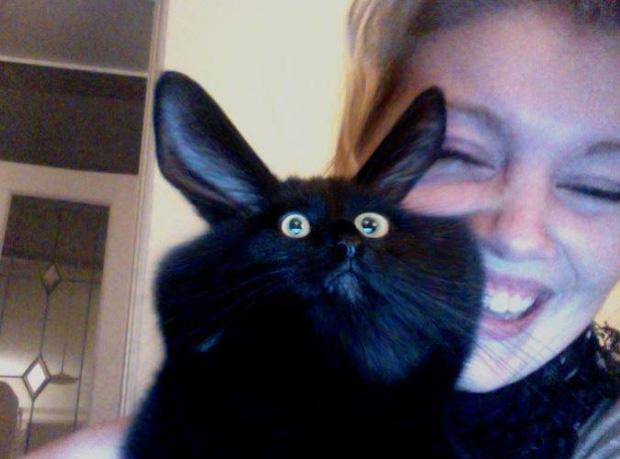 Ảnh hài: Khi 'boss' mèo cố gắng tỏ ra... bình thường-7